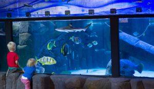 Aquarium--0001